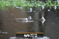 اکثر شهرها شاهد بارندگی خواهند بود/ ورود سامانه بارشی از غرب