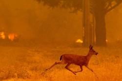 ارتفاعات «هرم» همچنان می سوزد/ خطر برای حیات وحش