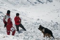 مفقود شدن ۲ کوهنورد در ارتفاعات امامزاده داود/جستجو ادامه دارد