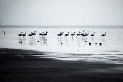 """""""كلستان"""" الايرانية تستضيف أسراب الطيور المهاجرة / صور"""
