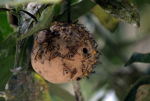 زهر زنبور ابر میکروب مقاوم را از بین می برد