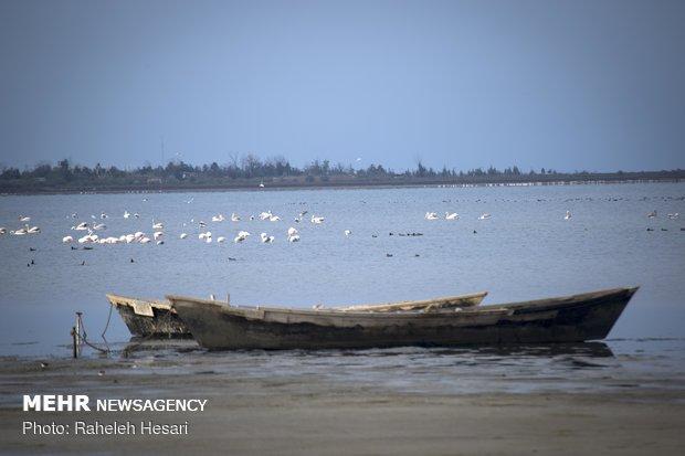 پرندگان مهاجر استان گلستان