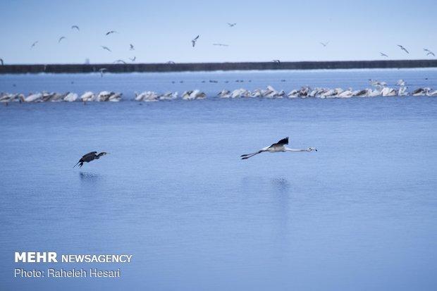 Migratory birds in Golestan prov.