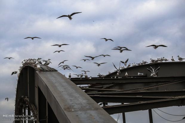 Karun River hosting migratory birds