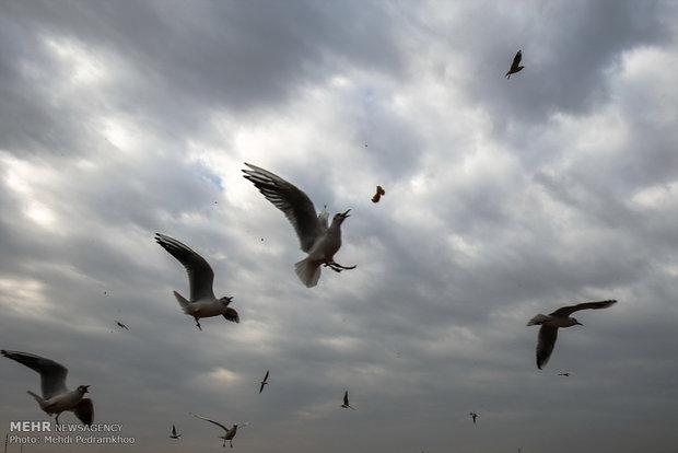 نهر کارون يستضیف الطيور أكلة الاسماك