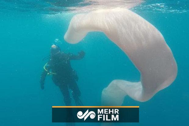 کشف کرم دریایی عظیم الجثه در اعماق اقیانوس