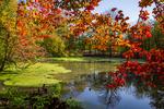 Beautiful sceneries of late autumn in Mazandaran