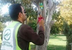 شناسنامهدار کردن الکترونیکی درختان در کرمانشاه