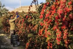 مدیریت منابع آبی بخش کشاورزی به جهاد کشاورزی واگذار شود