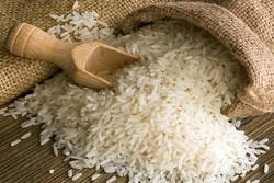 ۱۱ تن برنج مخلوط ایرانی و خارجی در بابل کشف شد