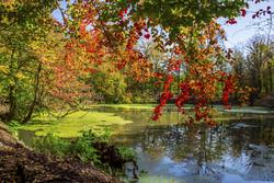 سروشتی جوانی پاییزی مازهندهران