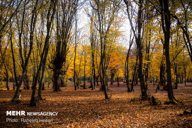 Superb autumn landscapes in Golestan prov.