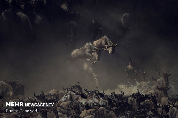 National Geographic Fotoğraf Yarışması