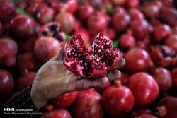 Tehran Organic Week Festival opens