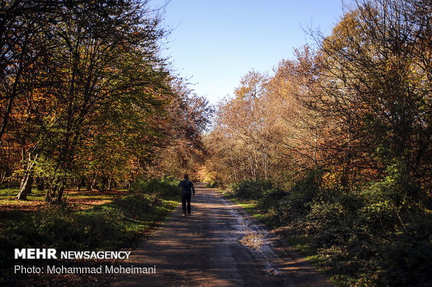 A thousand shades of Autumn in Golestan