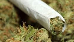 تنباکو باطعم«گل»/تغییر رویکرد مافیای مواد مخدر برای سقوط فرزندان