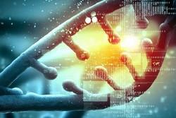 چین ابزار مهندسی ژنتیک دقیق تری ابداع کرد