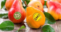 Iran imposing stricter rules on GM foods