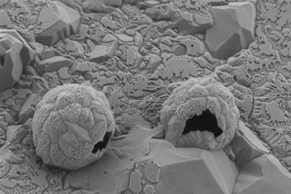 دارورسانی نوین به منظور هدف قرار دادن تومورهای سرطانی