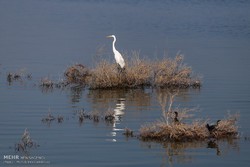 Rainfalls bring back life to Bamdej wetland, southwestern Iran