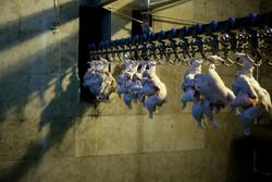 بزرگترین کشتارگاه گوشت سفید کشور در شوش افتتاح شد
