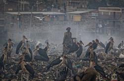 آلودگی زمین به دست بشر