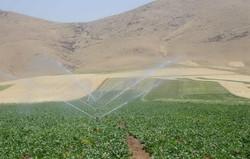 اراضی مستعد زنجان برای اجرای آبیاری تحت فشار ۱۲۴ هزار هکتاراست