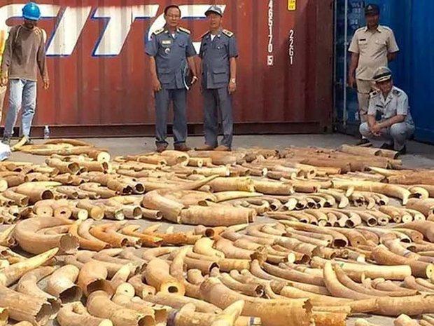 کمبوڈیا میں ایک ہزار سے زائد ہاتھی دانتوں کی اسمگلنگ ناکام