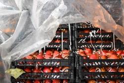 ۸ محصولی که در میادین میوه و تره بار نصف قیمت عرضه می شود