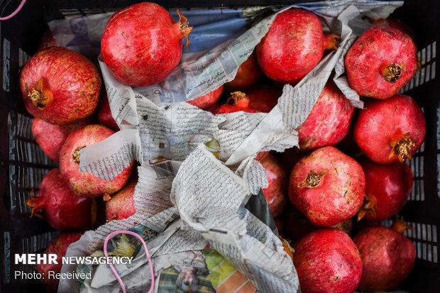 آغاز جشنواره یلدای ۹۸ در میادین میوه و تره بار