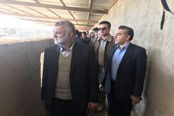 بازدید وزیر جهاد کشاورزی از مزرعه پرورش شتر مرغ در هیرمند