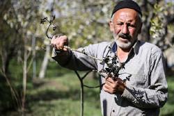 کمیته هواشناسی به کشاورزان قزوین هشدار داد
