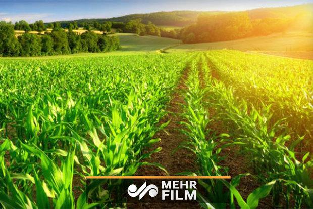 توسعه صنعت باغداری به کمک شرکتهای دانشبنیان