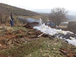 دفن بهداشتی ۱۰ هزار قطعه مرغ مسموم در جوانرود