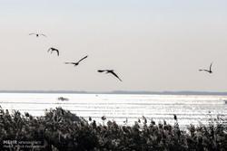 سرشماری پرندگان آبزی و کنار آبزی تالاب ها در همدان پایان یافت