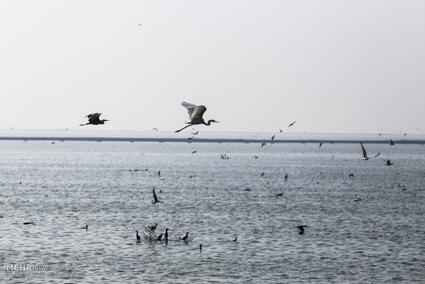 Migratory birds in Hour al-Azim
