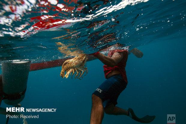 شکار خرچنگ