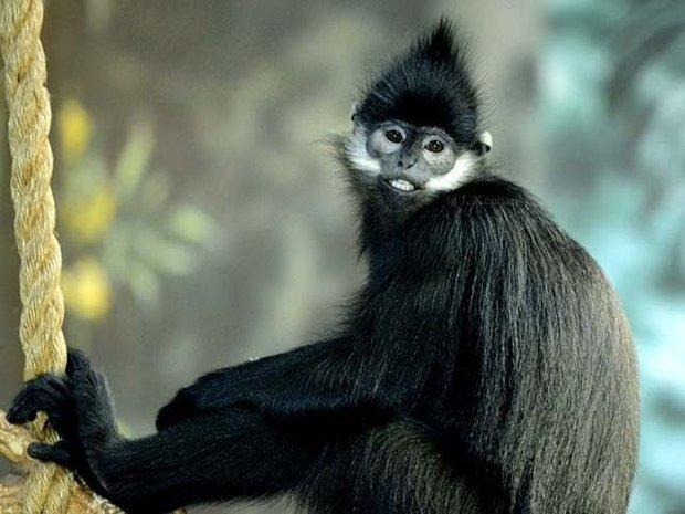 ویتنام میں بندر کھانے پر 6 افراد گرفتار