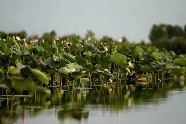 Researchers remove sediments in Anzali wetland using nanotechnology