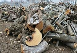 جلوگیری از قلع و قمع درختان در اردبیل نیازمند افزایش حساسیتهاست
