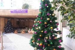 İran'da farklı Noel kutlamaları