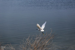 Migratory birds wintering in Iran increased by 26.5%