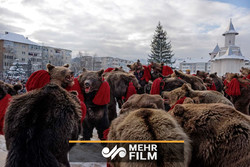 VIDEO: Romanians parade in bear skins to bring luck