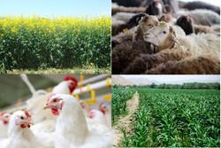 ۲ هزار طرح بخش کشاورزی سیستان وبلوچستان تسهیلات دریافت کردند