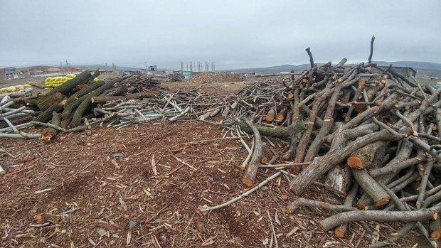 متخلفان قطع درختان در اراضی ملی استان فارس دستگیر شدند
