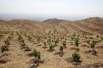 انجام ۲۰۰ هکتار جنگلکاری طی سال گذشته در شهرستان تویسرکان