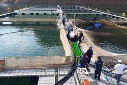 حمایت فائو از توسعه پرورش ماهی در قفس / ایران دومین تولیدکننده آبزیان در خاورمیانه