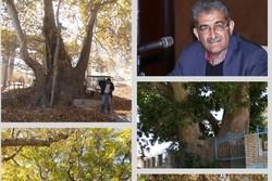 ۱۱۸ اصله درخت کهنسال بوانات مهیا برای ثبت در فهرست میراث طبیعی