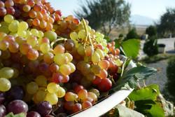 پنجمین جشنواره انگور، بومگردی و گردشگری «حسن رباط» برگزار میشود