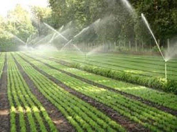 همدان از استان های پیشتاز کشور در اجرای سیستم های نوین آبیاری است